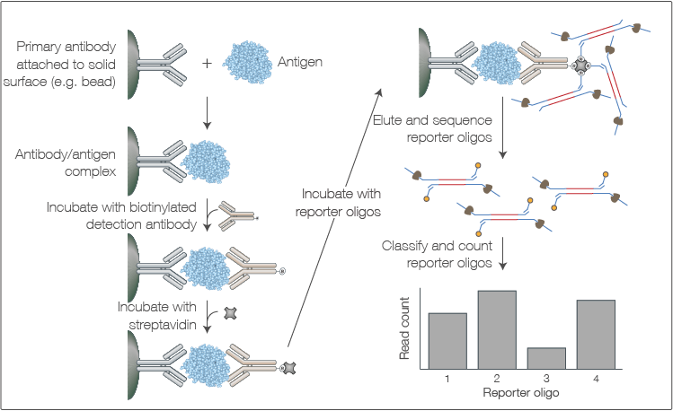 Multiplexed Quantification Of Protein Panels By Nanopore Sequencing