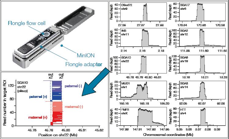 A rapid CRISPR/Cas9-mediated, amplification-free target enrichment on