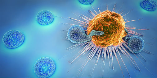 Lymphocytes killing cancer cell