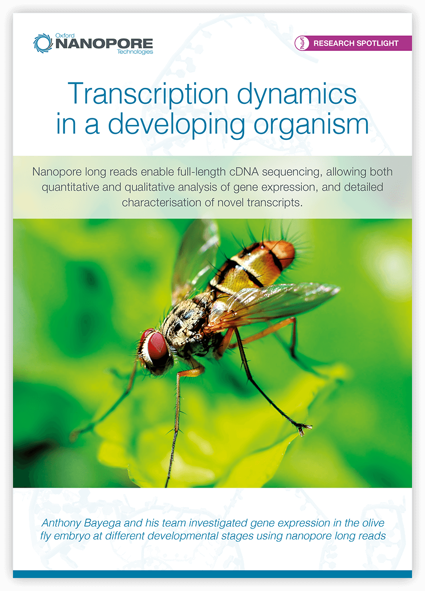 Transcription dynamics in a developing organism