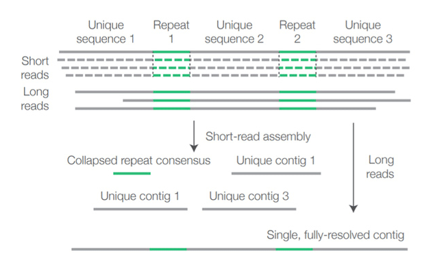 Fully resolved contig using long sequencing reads