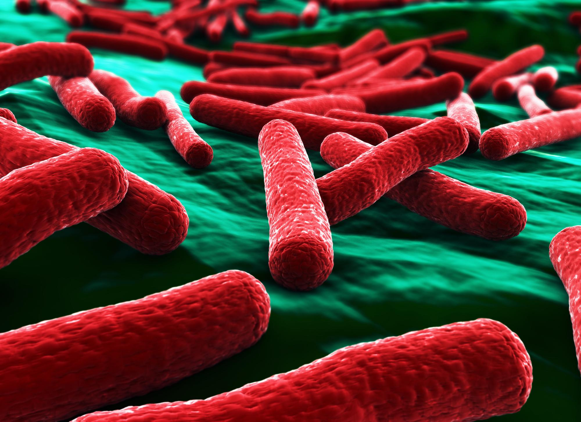 E. coli bacteria close up in red on green background