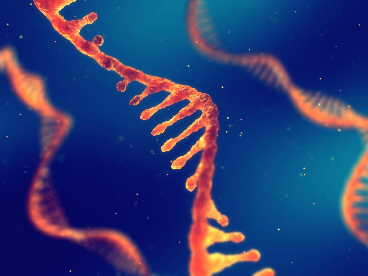 Orange RNA strands on dark blue background
