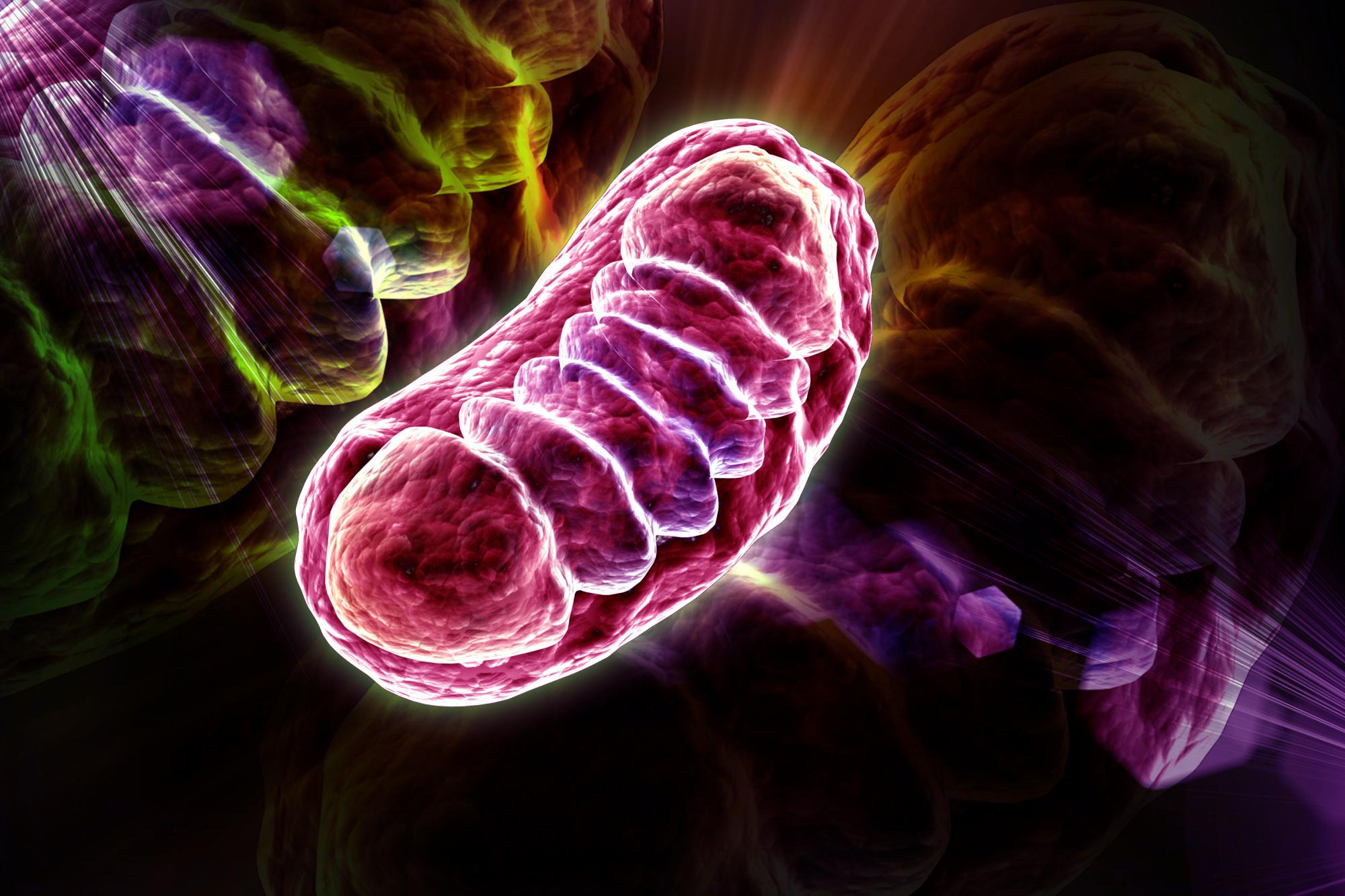 pink mitochondrion on dark background