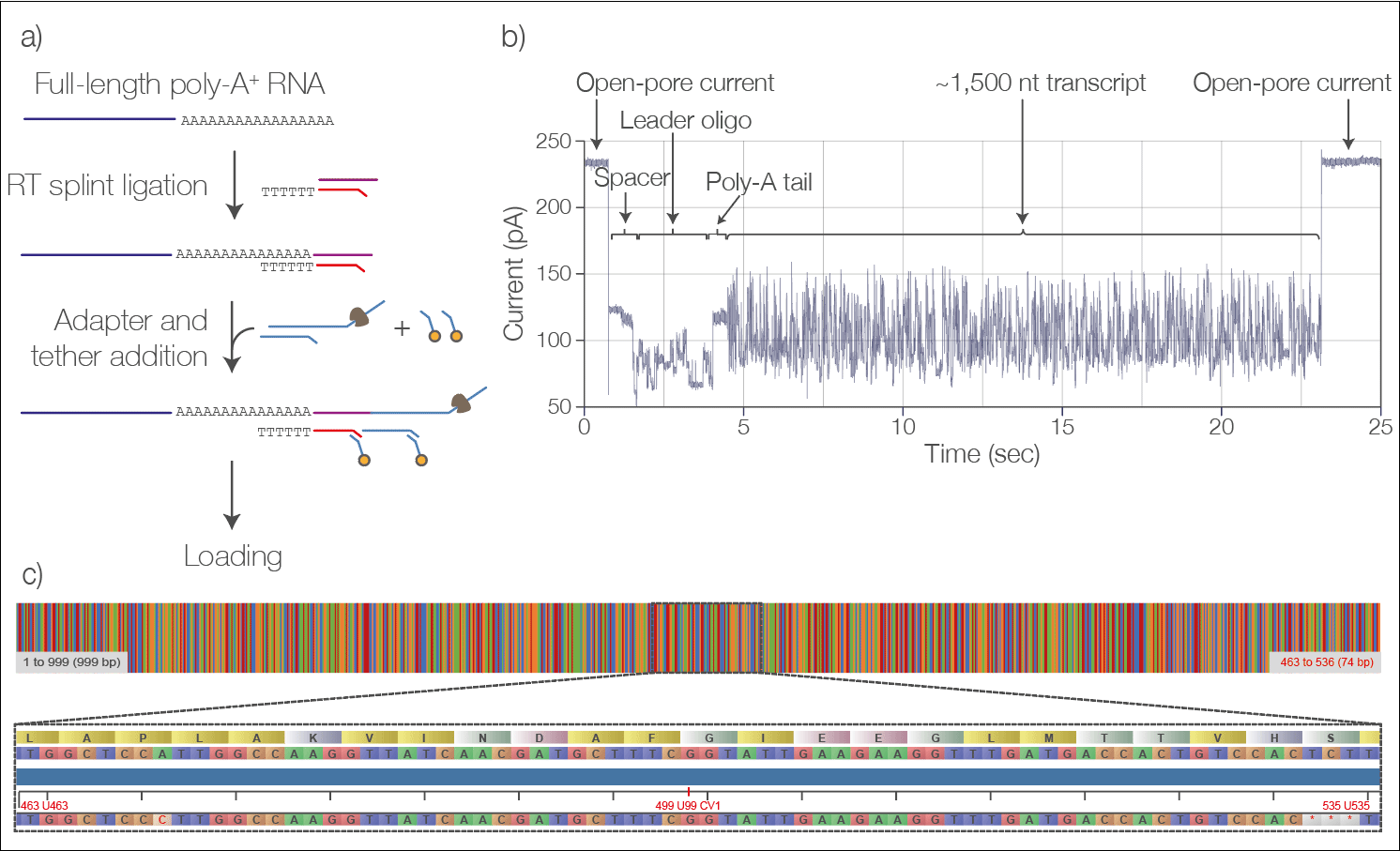 Nanopores allow direct sequencing of RNA strands, giving